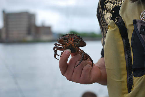 Student holding a crab
